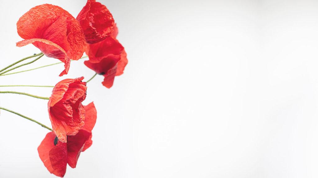 綺麗な赤いお花